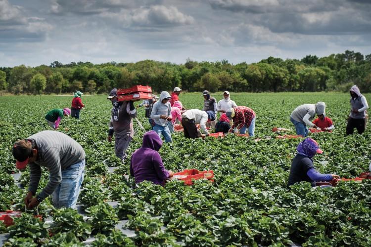 65 Best Farmer Pick Up Lines