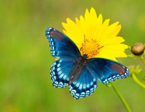 butterfly nature image