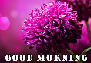flower-good-morning-image