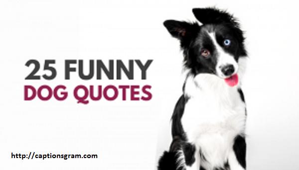 Funny Dog Caption For Instagram
