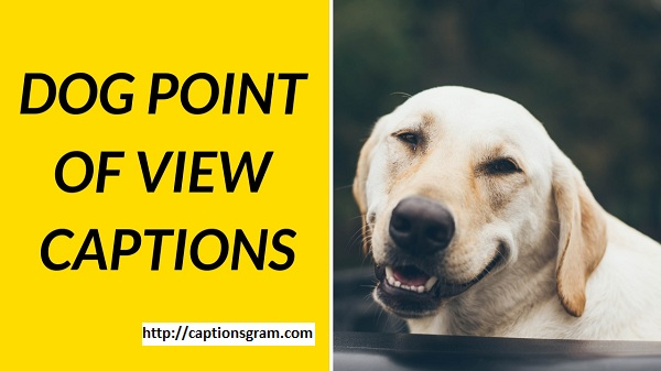 Dog Point Of View Caption For Instagram