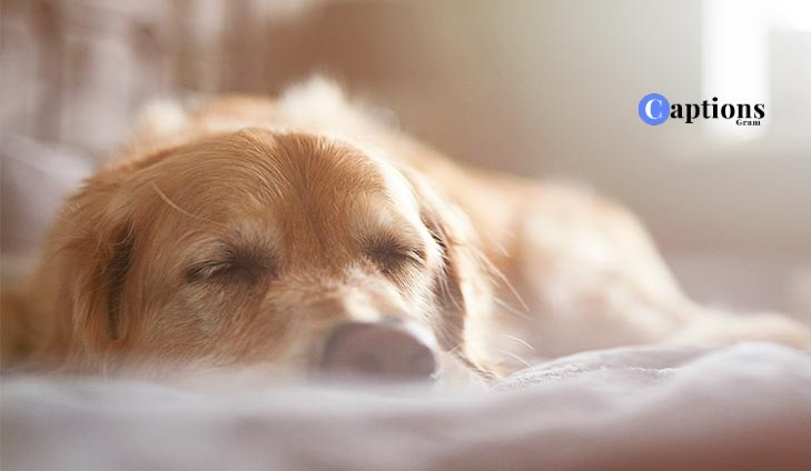 Sleeping Dog Caption For Instagram