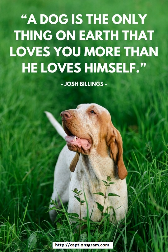 Dogs Inspirational Quotes For Instagram - captionsgram