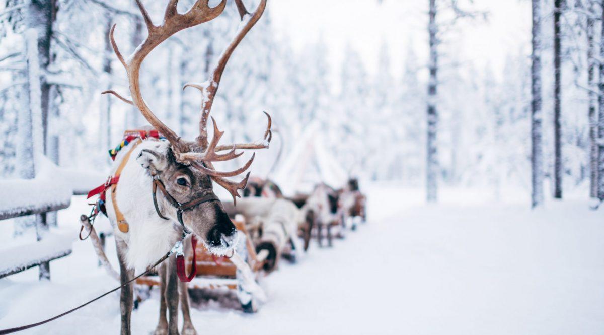 Best Funny Reindeer Jokes