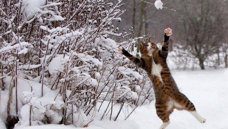 Funny Winter Puns
