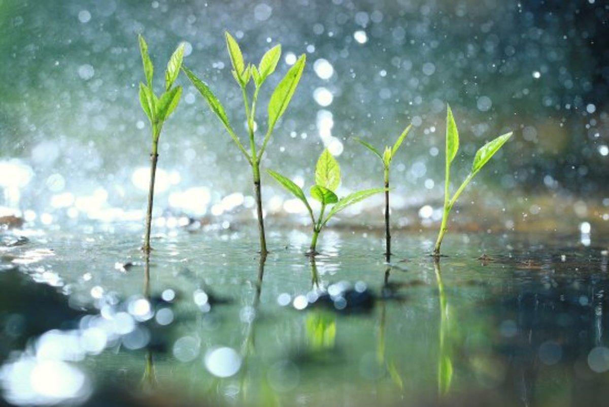 Good Rain Puns