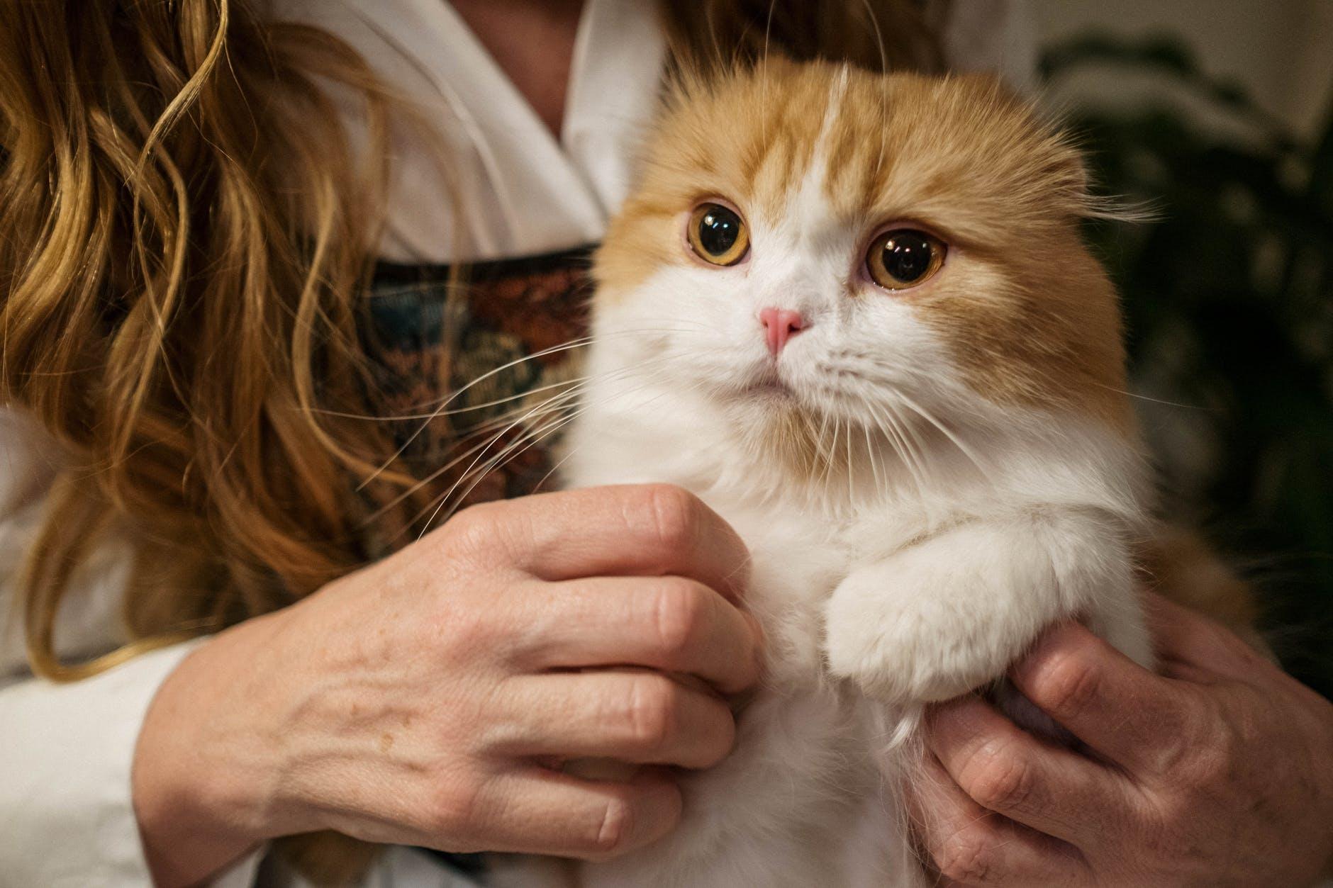 Best Cat Instagram Captions