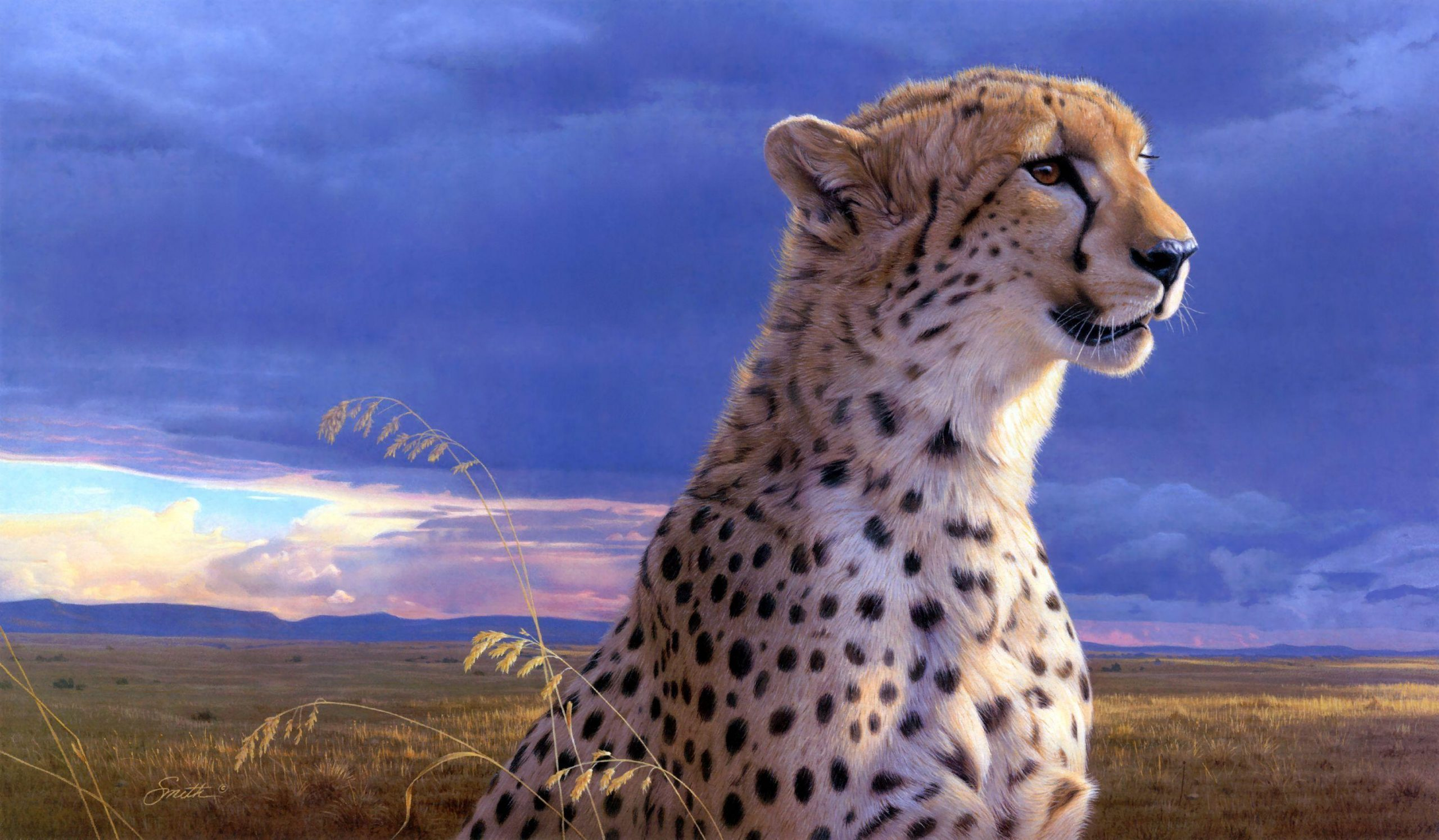 Cheetah Captions Quotes & Sayings