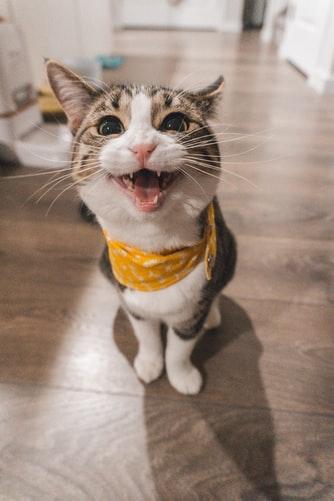 INSTAGRAM CAPTIONS FOR CUTE CAT