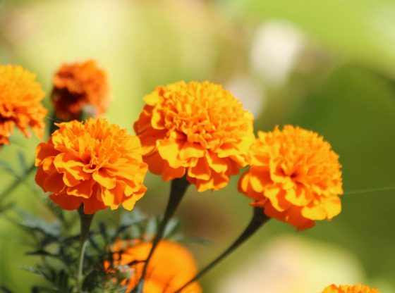 Marigold Captions for Instagram