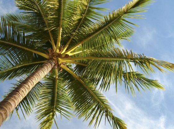 Palm Tree Instagram Captions