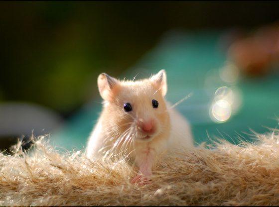 best hamster captions