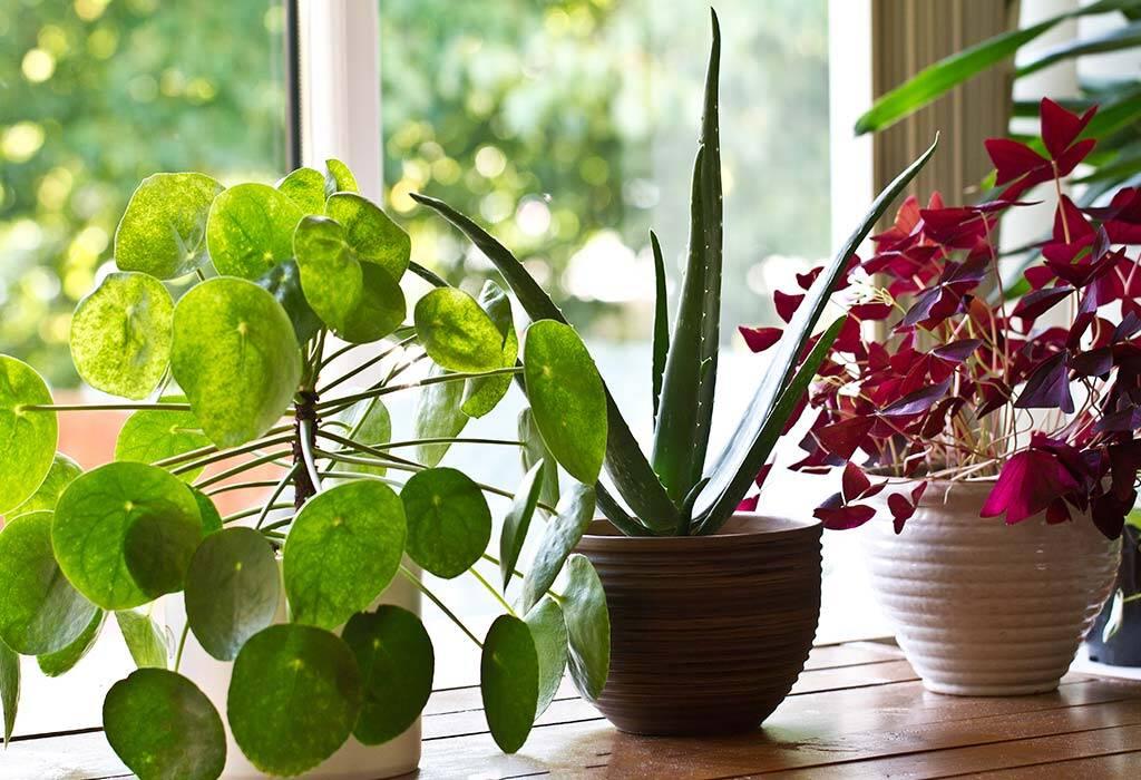 Adorable Plant Captions For Instagram