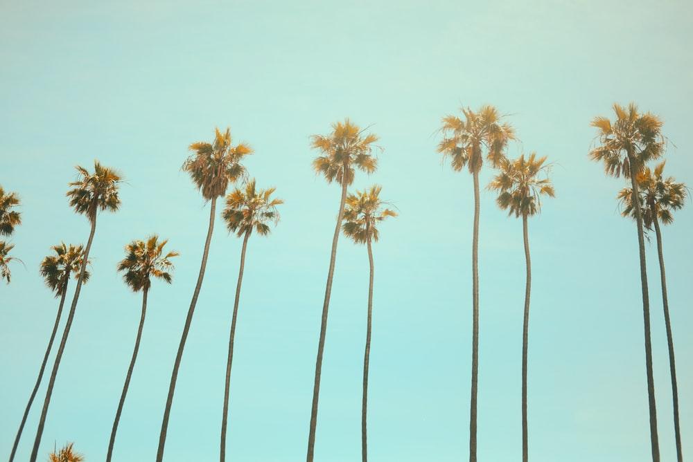 California Captions For Instagram