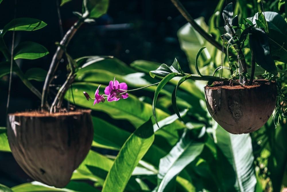 Great Plant Captions